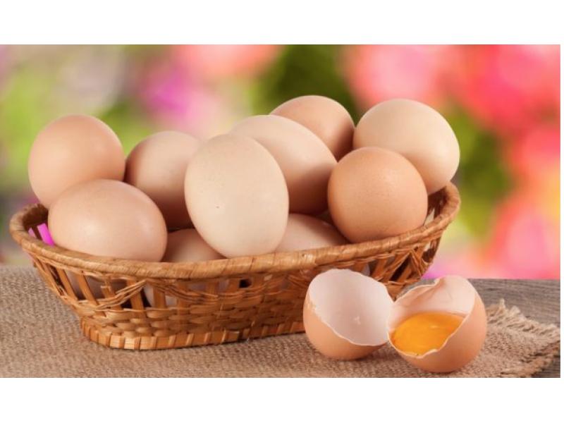 香港 光華農場走地無激素雞蛋 6隻